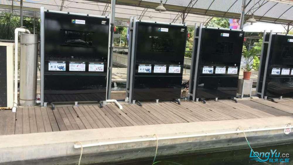 重磅出击艾洁百能系统将现身东莞锦鲤展 西安龙鱼论坛 西安博特第2张
