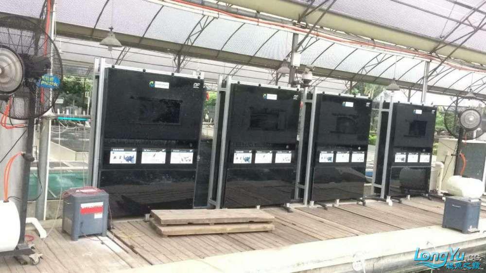 重磅出击艾洁百能系统将现身东莞锦鲤展 西安龙鱼论坛 西安博特第3张