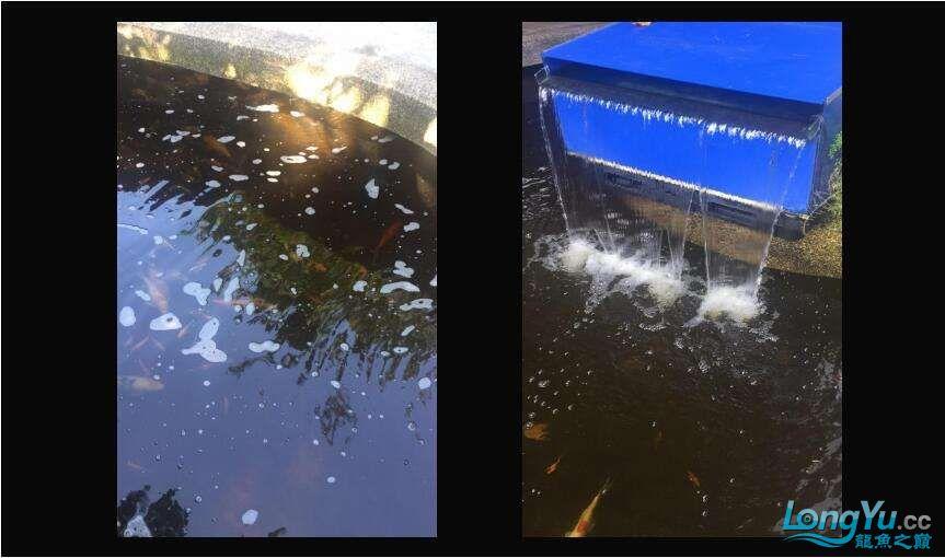 重磅出击艾洁百能系统将现身东莞锦鲤展 西安龙鱼论坛 西安博特第9张