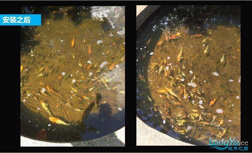 重磅出击艾洁百能系统将现身东莞锦鲤展 西安龙鱼论坛 西安博特第10张