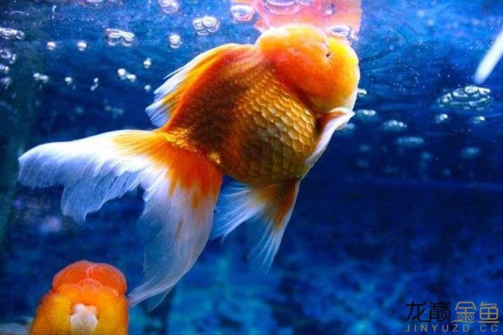西安有没有水族馆金色 西安观赏鱼信息
