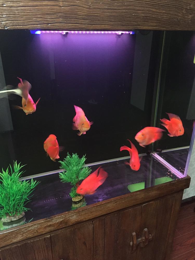 西安观赏鱼在哪水绿还是玻璃的问题 西安龙鱼论坛 西安博特第1张