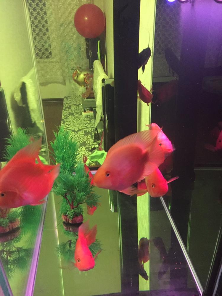 西安观赏鱼在哪水绿还是玻璃的问题 西安龙鱼论坛 西安博特第2张