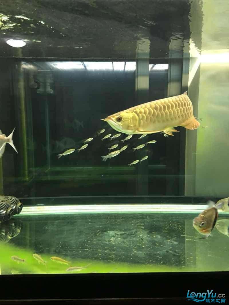 西安有没有水族馆又冒个泡 西安龙鱼论坛 西安博特第2张