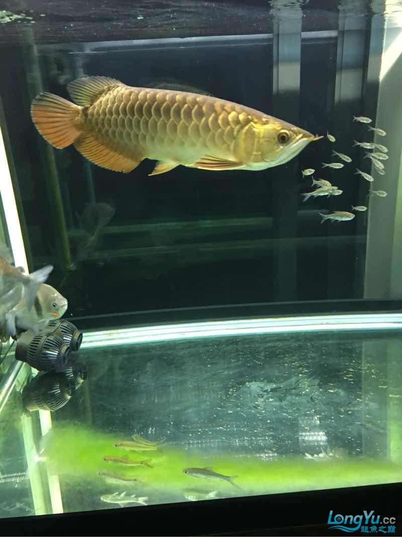 西安有没有水族馆又冒个泡 西安龙鱼论坛 西安博特第3张