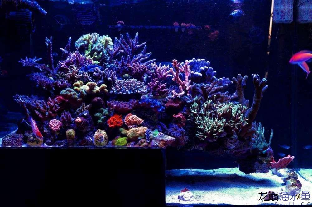 这种异型缸 西安观赏鱼信息 西安博特第1张