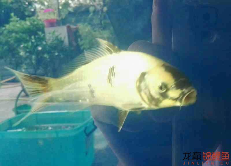 谁能猜到 西安龙鱼论坛 西安博特第2张