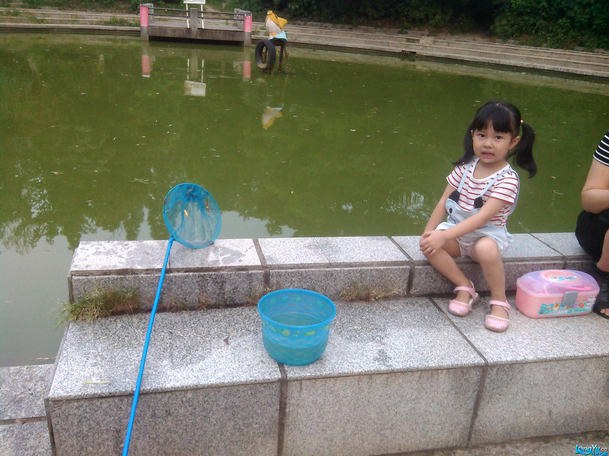 公园野采(二)之野采西安哪个水族店卖白子关刀进行时 西安观赏鱼信息 西安博特第2张