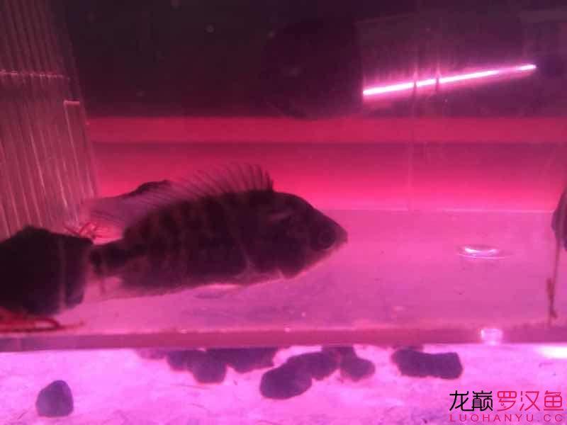 西安水草缸养什么鱼最好这张清楚吧出头了吗? 西安观赏鱼信息 西安博特第1张