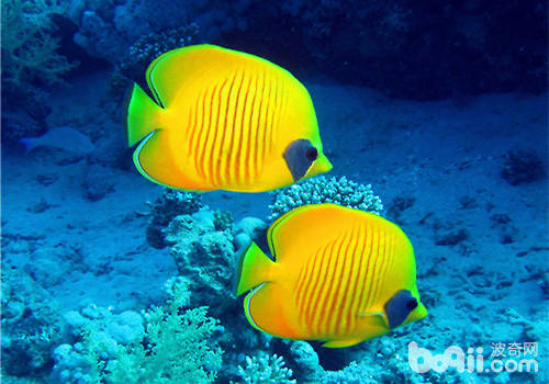 西安水草缸养什么鱼最好这张清楚吧出头了吗? 西安观赏鱼信息 西安博特第2张