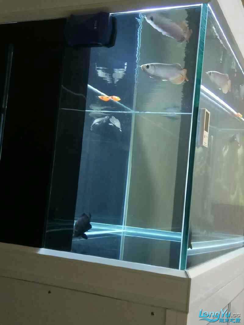 汇报 西安观赏鱼信息 西安博特第1张