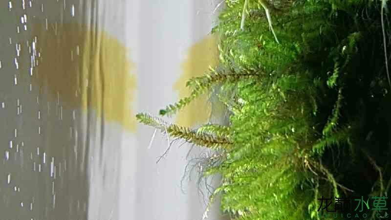 这是什么藻繁殖很快 西安观赏鱼信息 西安博特第3张