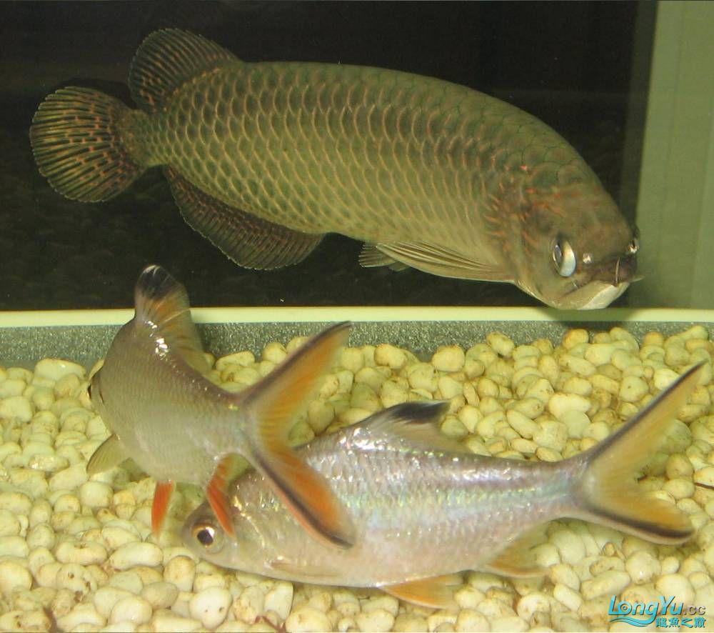 我很丑但我也是龙 西安观赏鱼信息 西安博特第4张