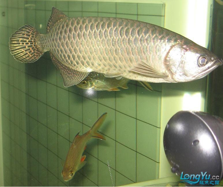 我很丑但我也是龙 西安观赏鱼信息 西安博特第5张