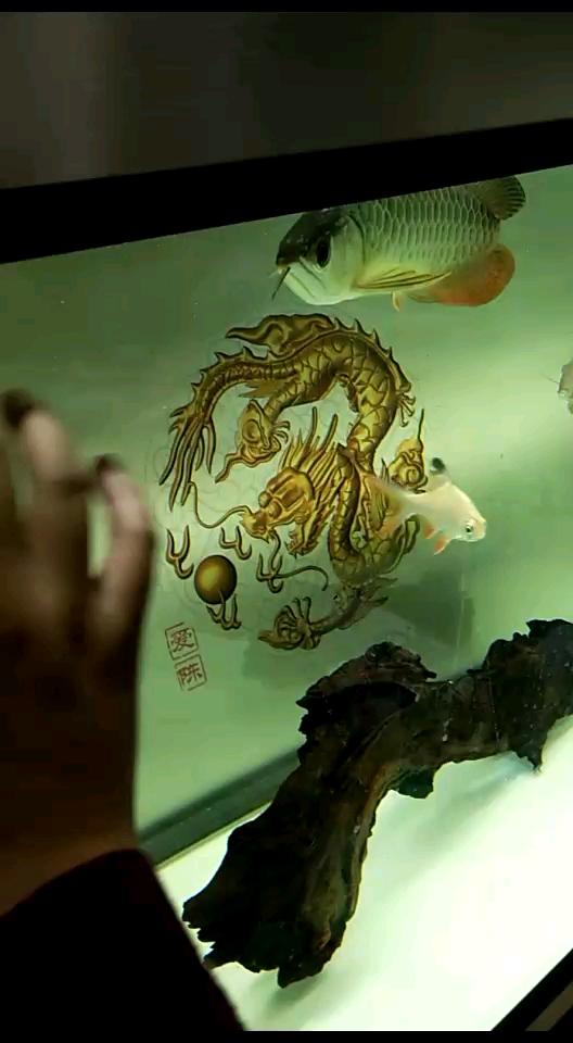 我与爱鱼的美好时光之沉木的好处 西安观赏鱼信息 西安博特第1张