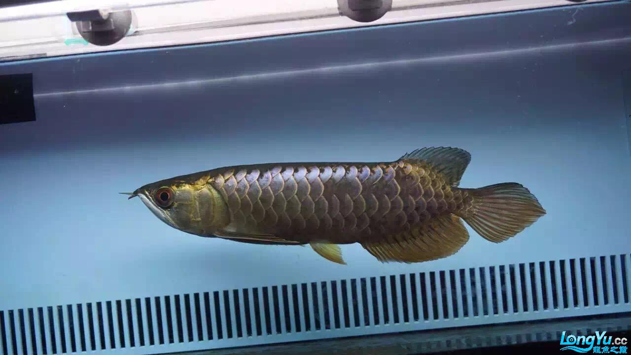 过背蓝底吗? 西安龙鱼论坛 西安博特第3张