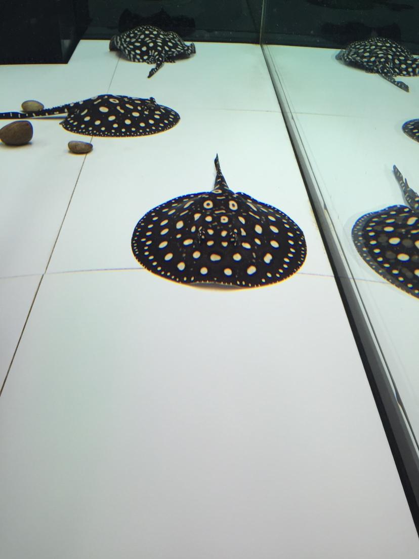 西安金鱼缸适合养什么水草纯血太空的千变万化 西安观赏鱼信息 西安博特第2张