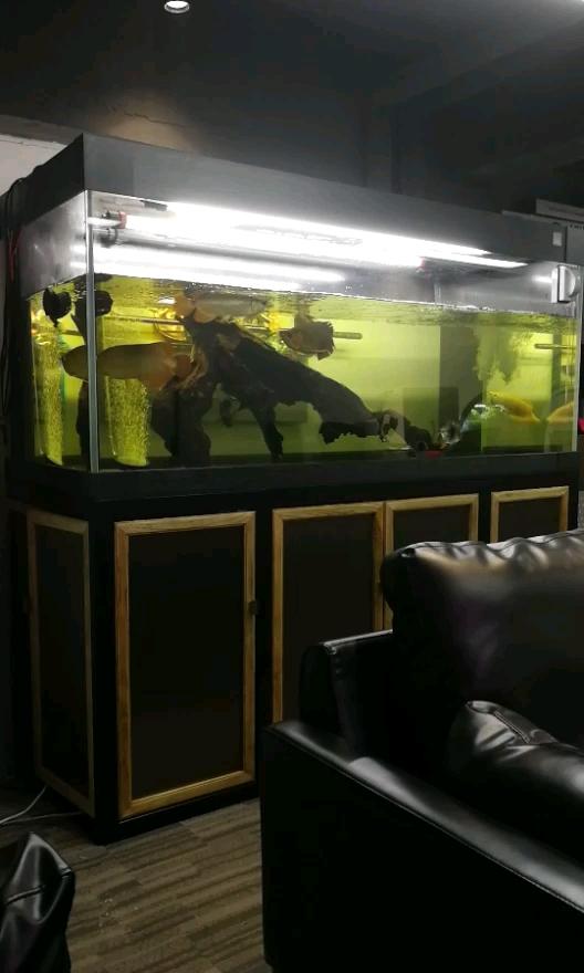 半水位治疗湖北鱼友圈龙巅 西安观赏鱼信息