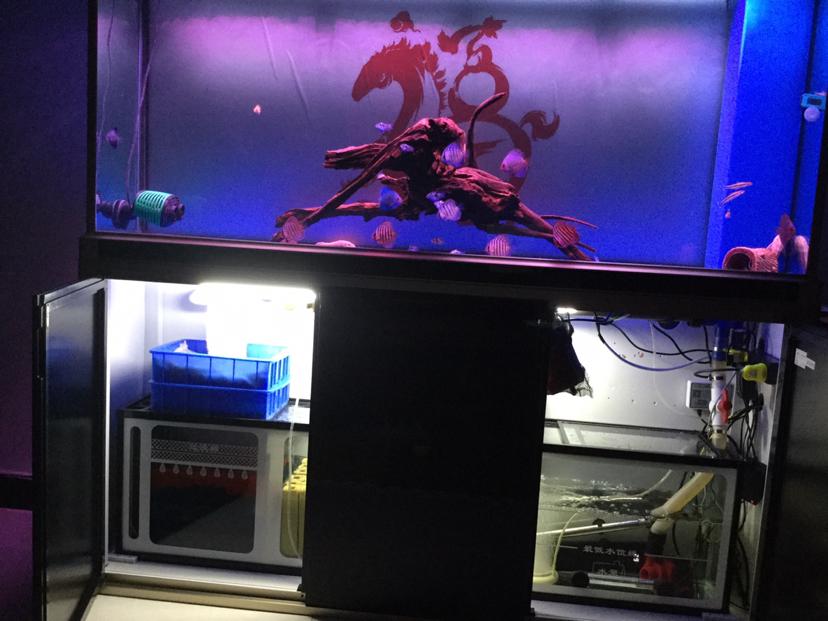 光特亿智能wifi水泵申请试用 西安观赏鱼信息 西安博特第2张