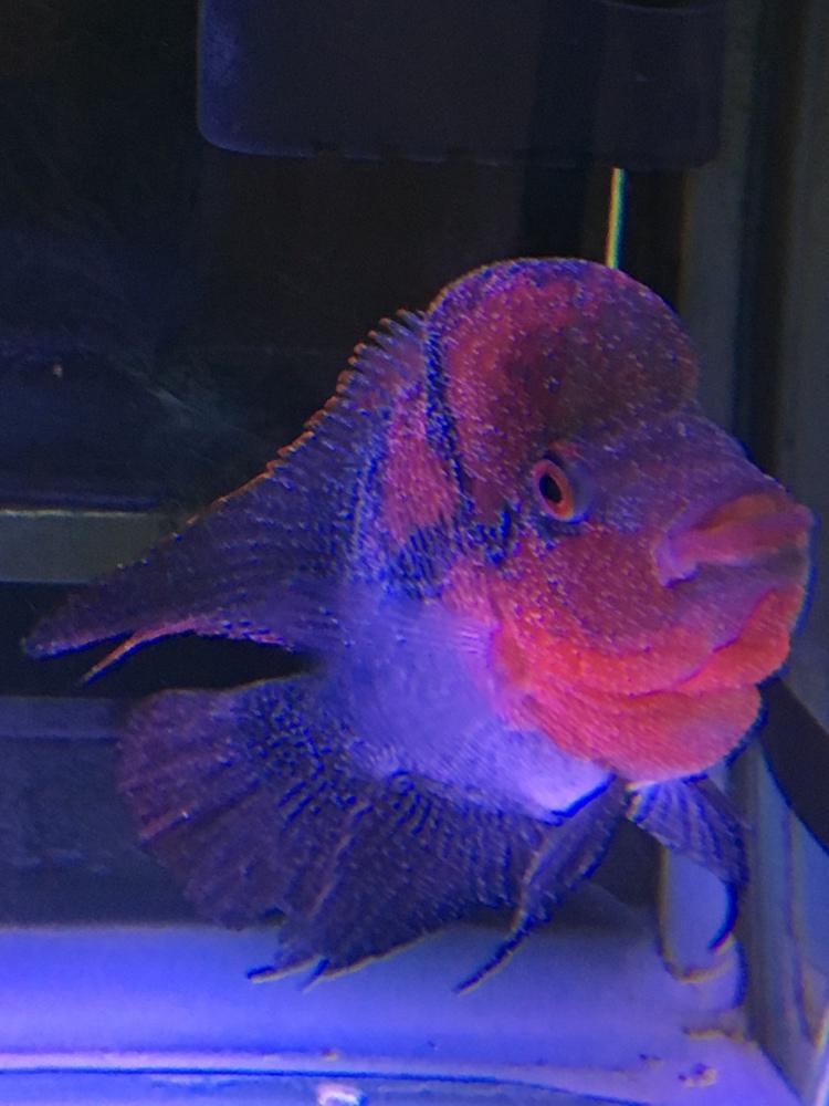 白点病第三天西安龙鱼和什么鱼混养最好 西安龙鱼论坛 西安博特第1张