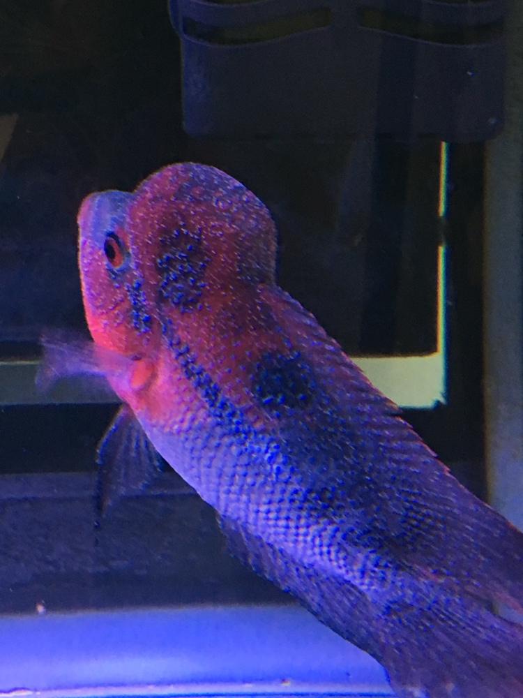 白点病第三天西安龙鱼和什么鱼混养最好 西安龙鱼论坛 西安博特第2张