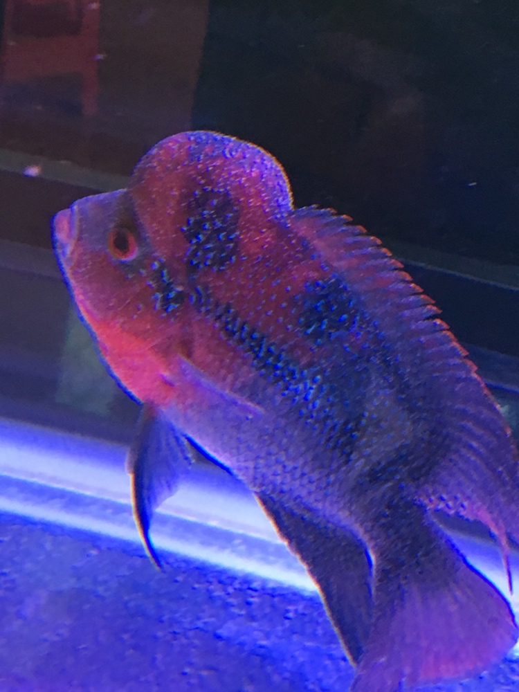白点病第三天西安龙鱼和什么鱼混养最好 西安龙鱼论坛 西安博特第3张