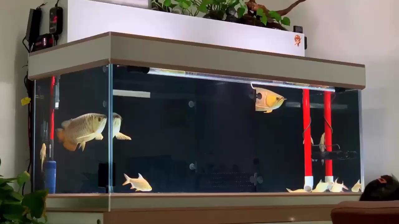 活跃下浙江鱼友圈 西安观赏鱼信息