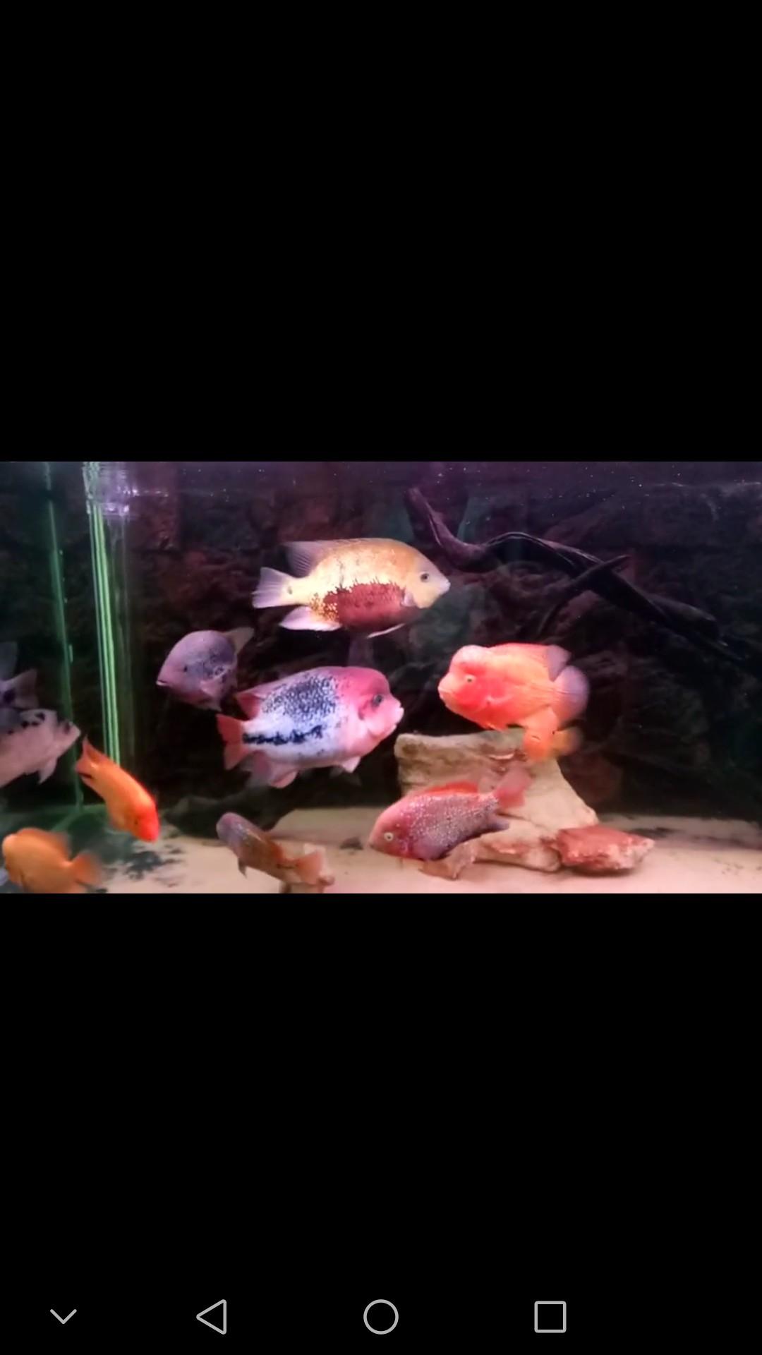 西安布隆迪六间鱼鱼友的 西安观赏鱼信息 西安博特第1张