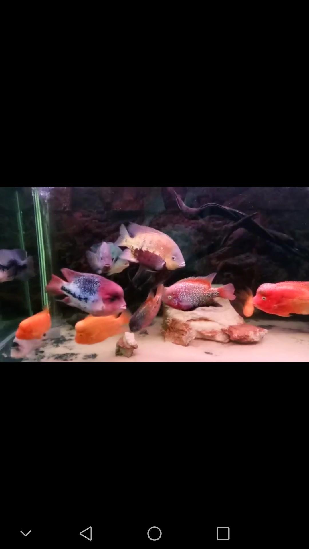 西安布隆迪六间鱼鱼友的 西安观赏鱼信息 西安博特第2张