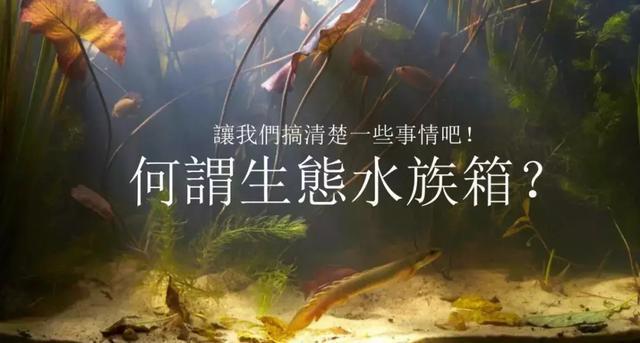 这一个总结教你如何解锁原生赛! 赛事指南 西安观赏鱼信息 西安博特第1张
