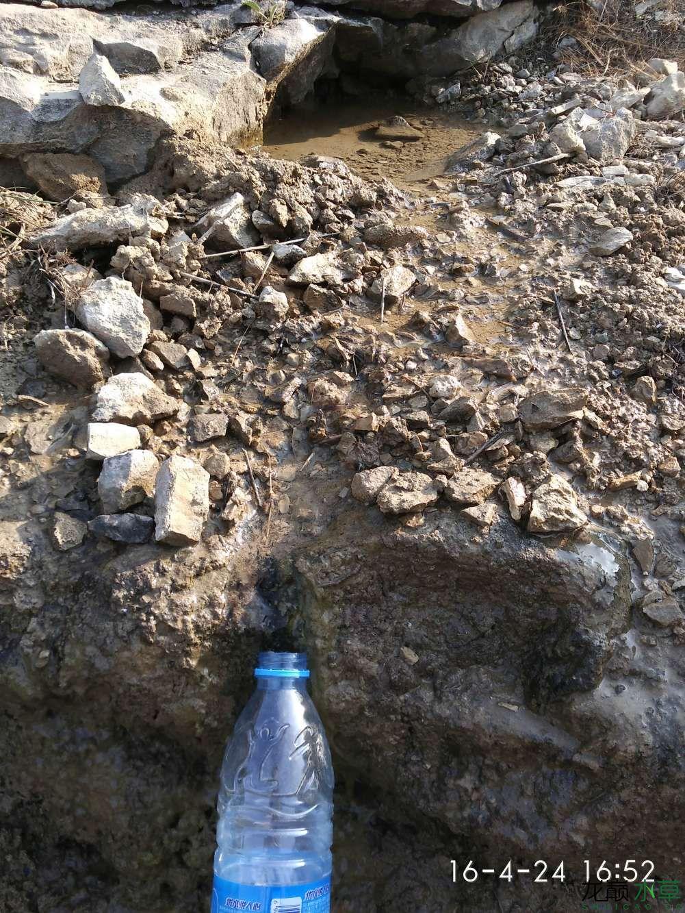 野采苔藓养在盆子里 西安龙鱼论坛 西安博特第4张