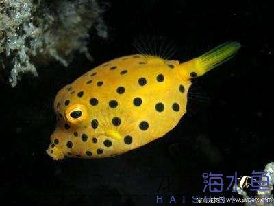 西安有几个花鸟市场520向木瓜鱼表白 西安观赏鱼信息 西安博特第2张