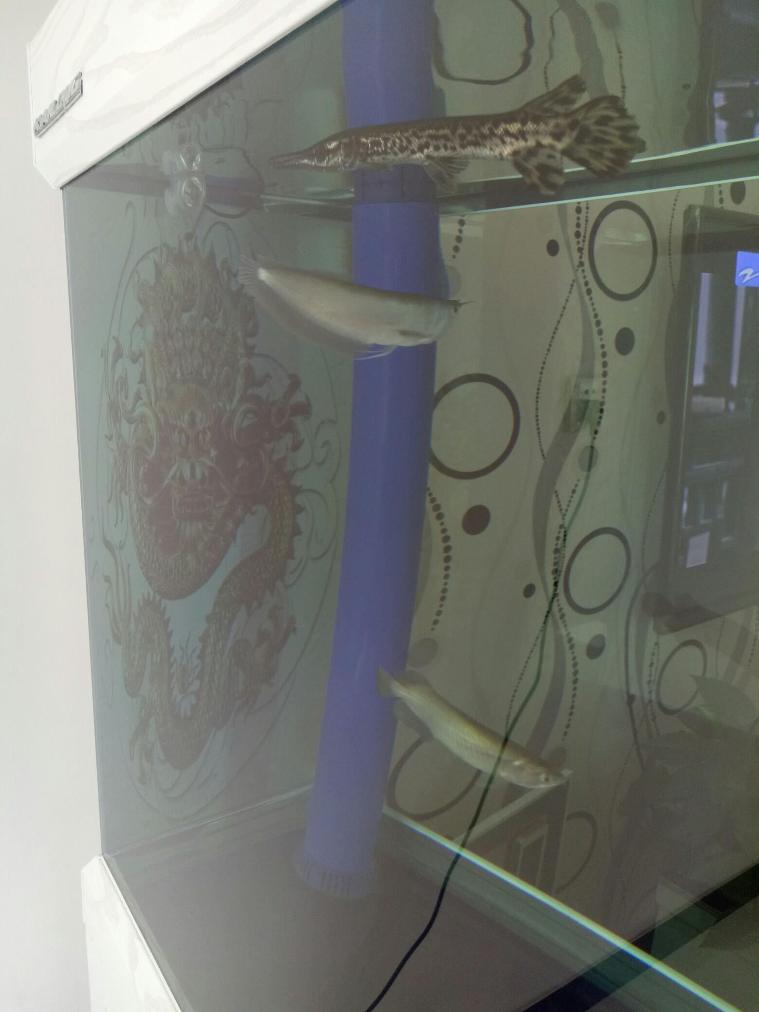 背景家龙鱼 西安观赏鱼信息 西安博特第3张