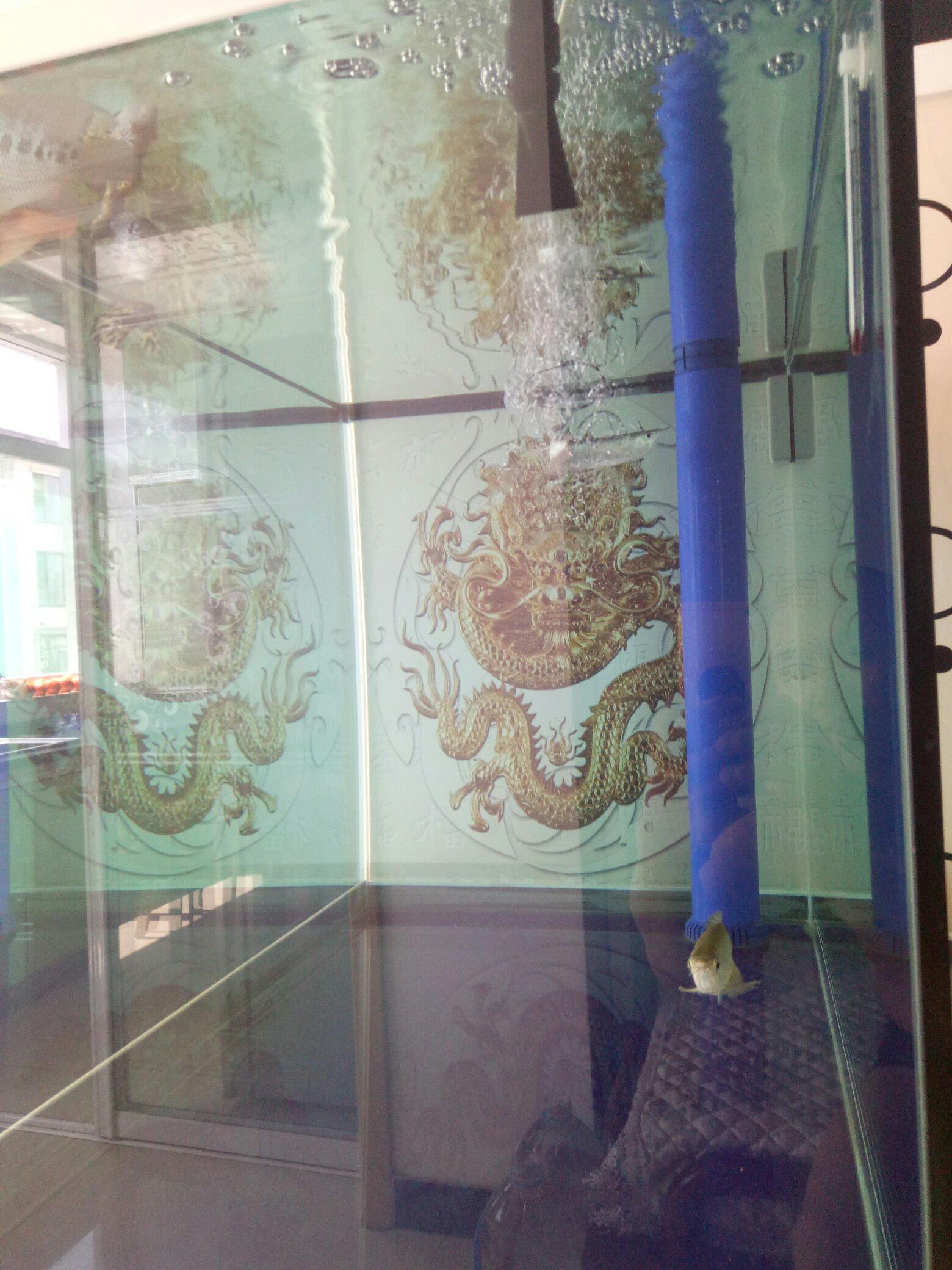 背景家龙鱼 西安观赏鱼信息 西安博特第1张