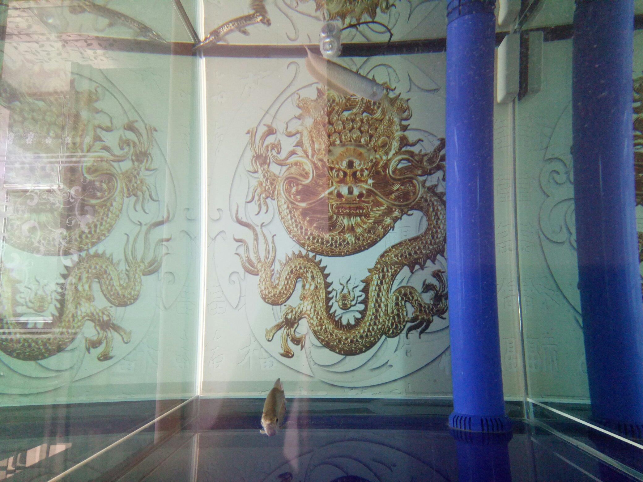 背景家龙鱼 西安观赏鱼信息 西安博特第4张