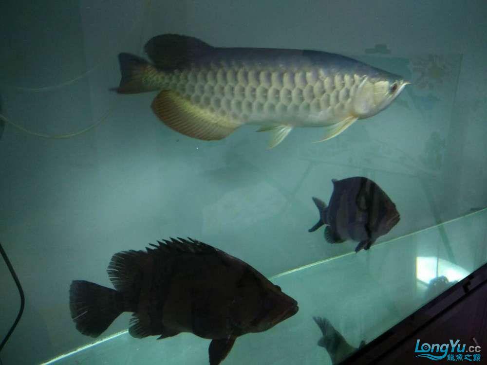 上滤水西安魟鱼吃什么也可以很清亮的 西安观赏鱼信息 西安博特第4张