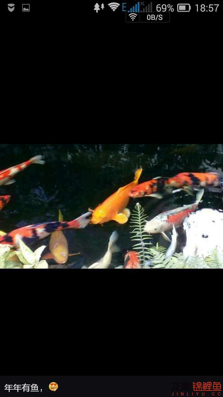[相约4周年]十不一样的六一节 西安龙鱼论坛 西安博特第4张