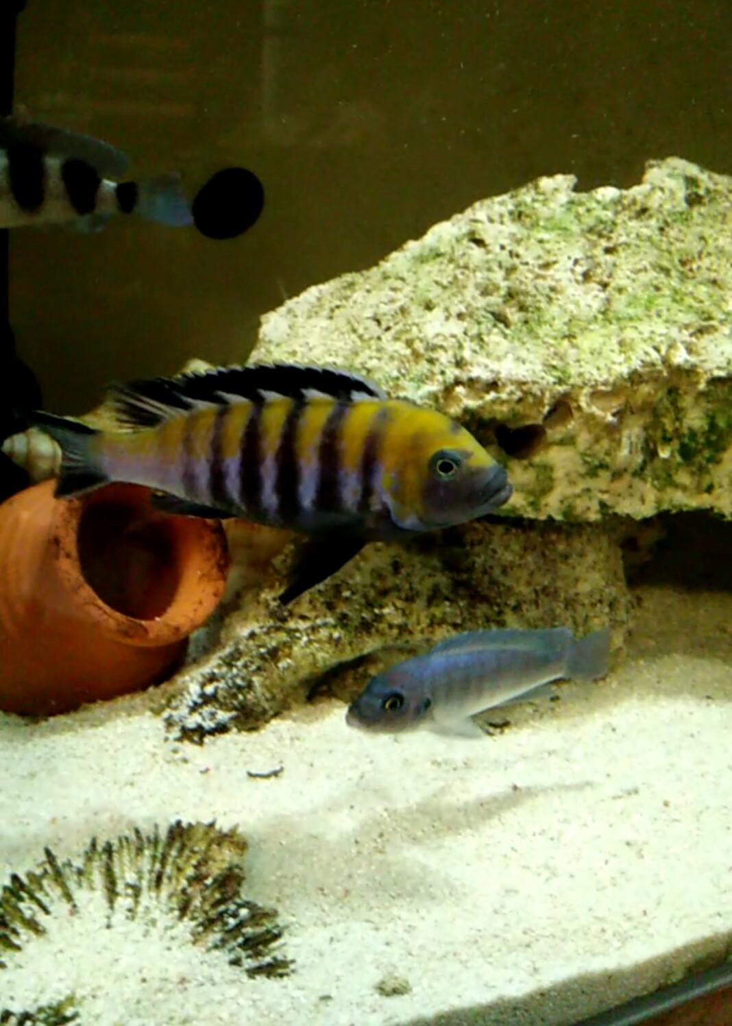 第一天登录 发一个 西安观赏鱼信息 西安博特第1张