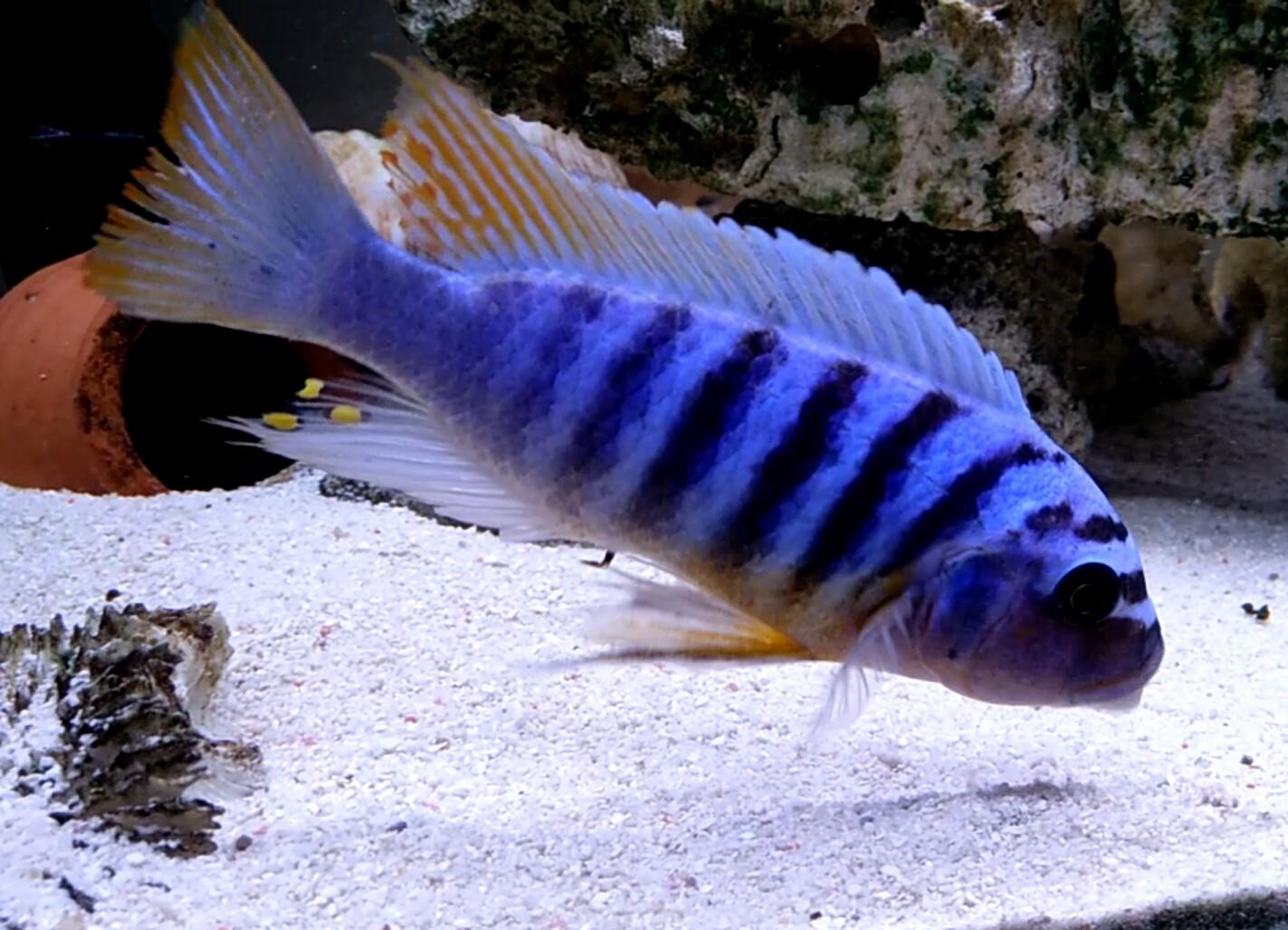 第一天登录 发一个 西安观赏鱼信息 西安博特第4张