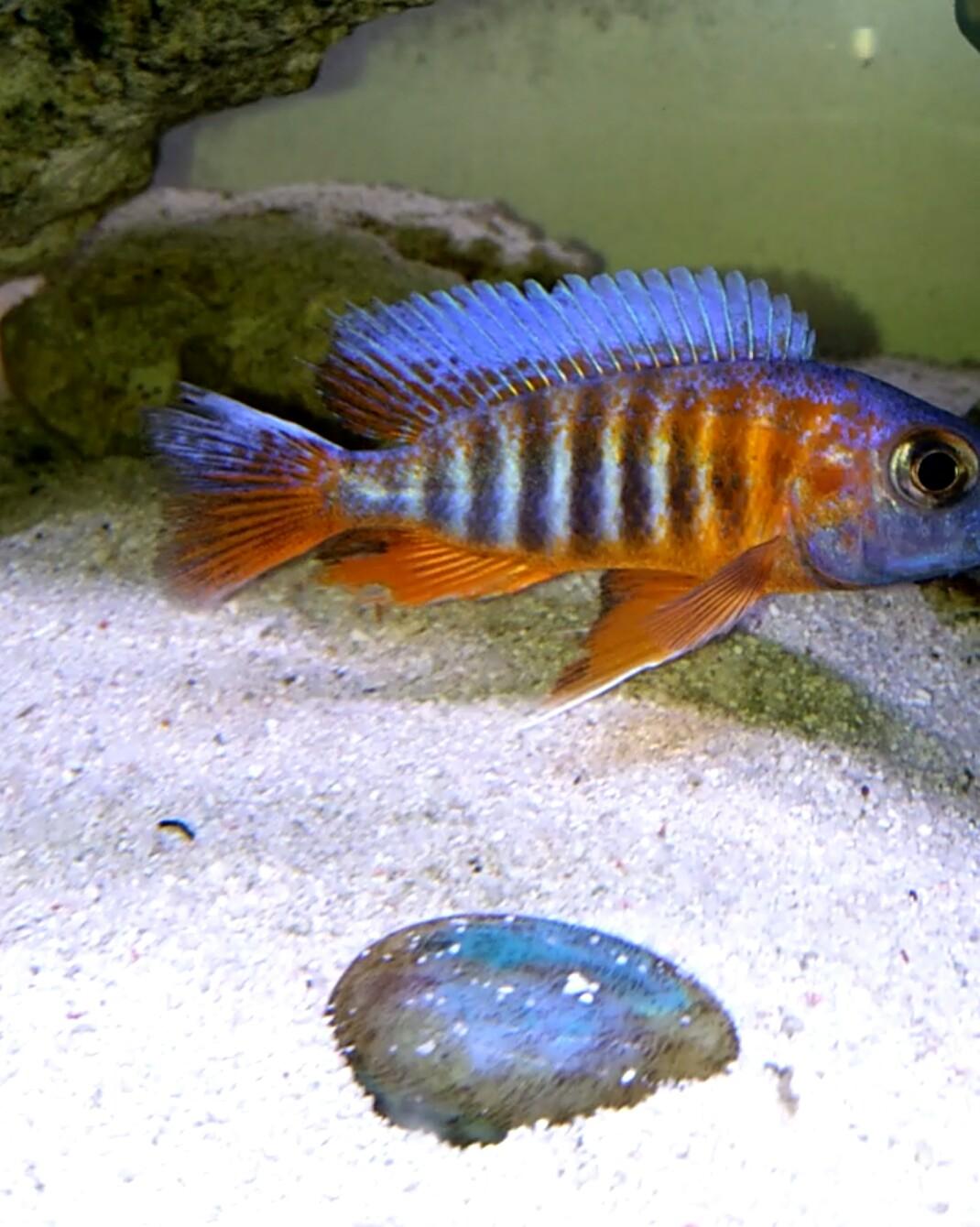 第一天登录 发一个 西安观赏鱼信息 西安博特第3张