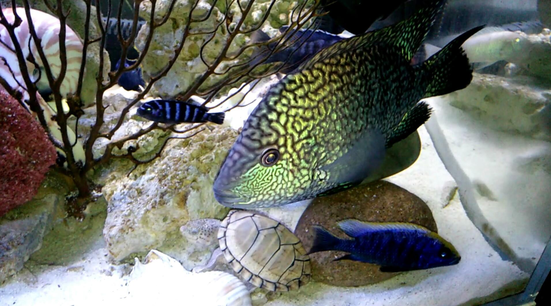 第一天登录 发一个 西安观赏鱼信息 西安博特第5张