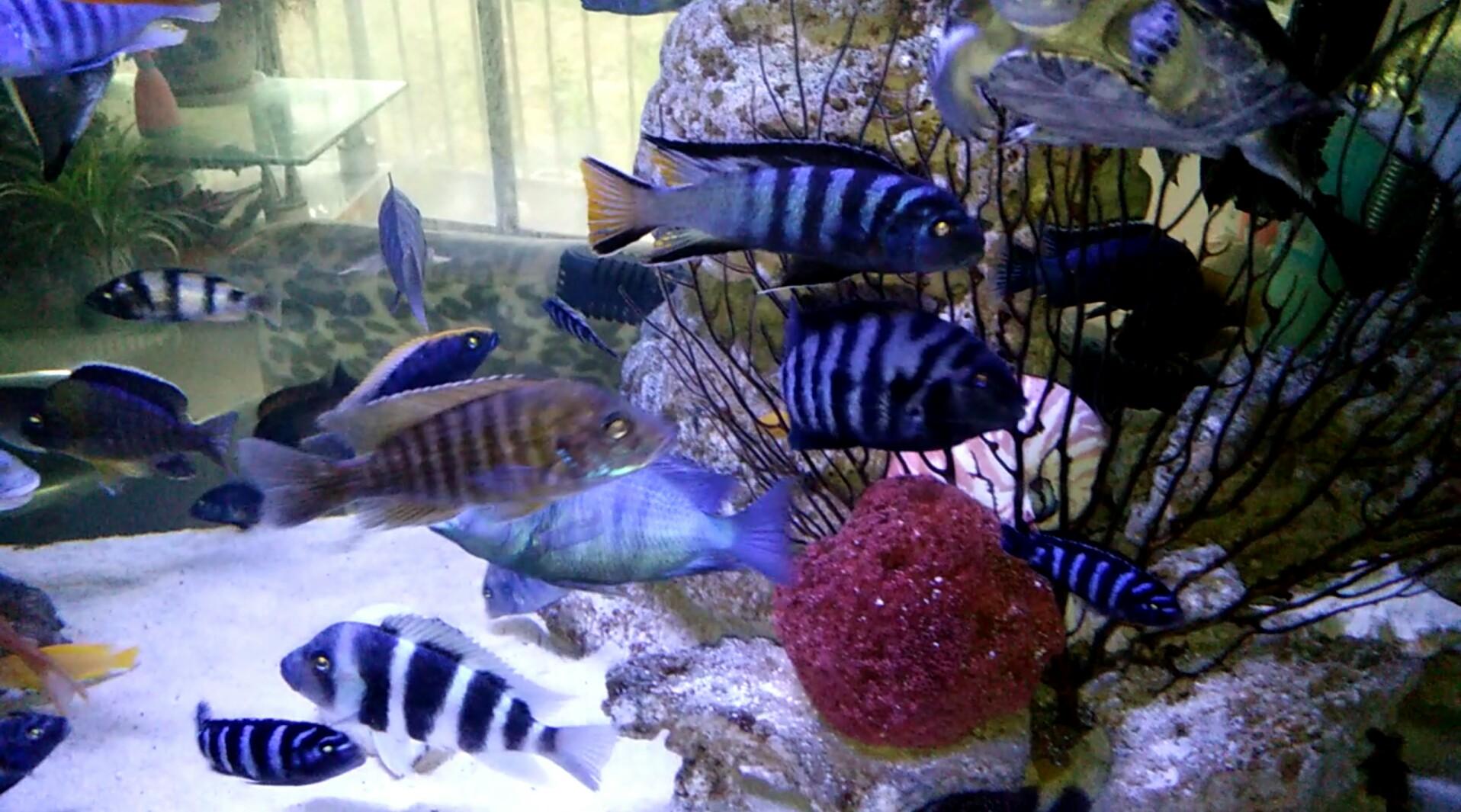第一天登录 发一个 西安观赏鱼信息 西安博特第6张