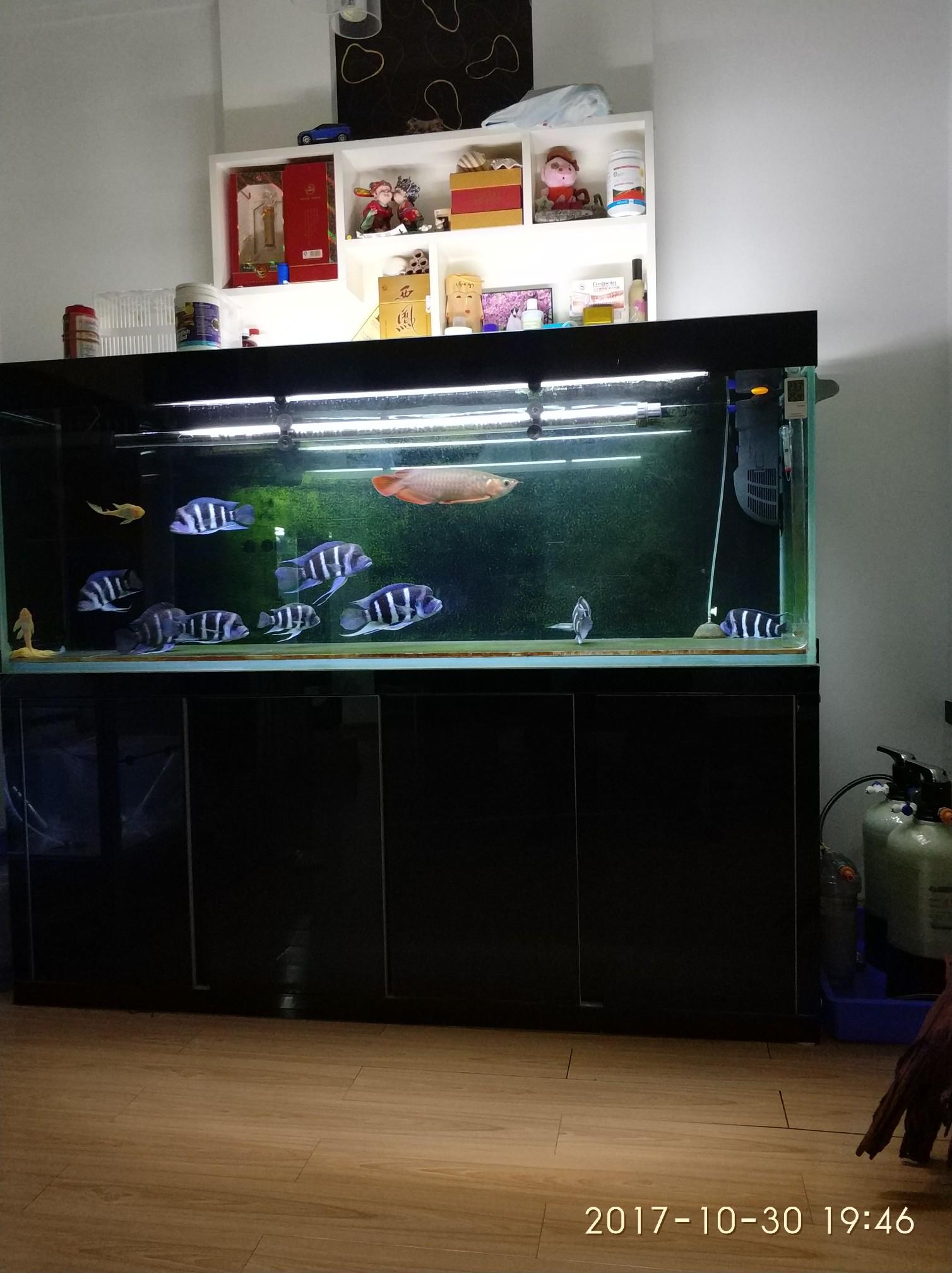 晒晒我的鱼们 西安观赏鱼信息 西安博特第1张