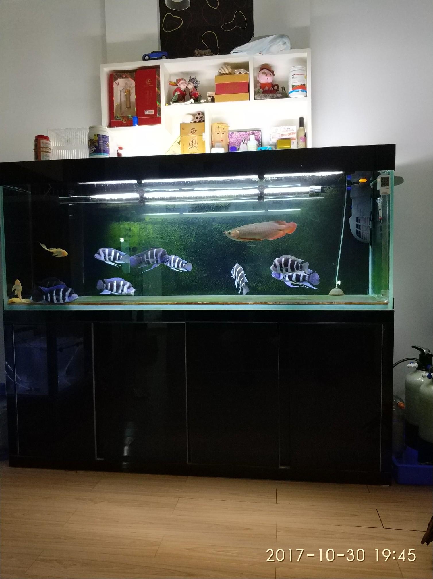 晒晒我的鱼们 西安观赏鱼信息 西安博特第2张