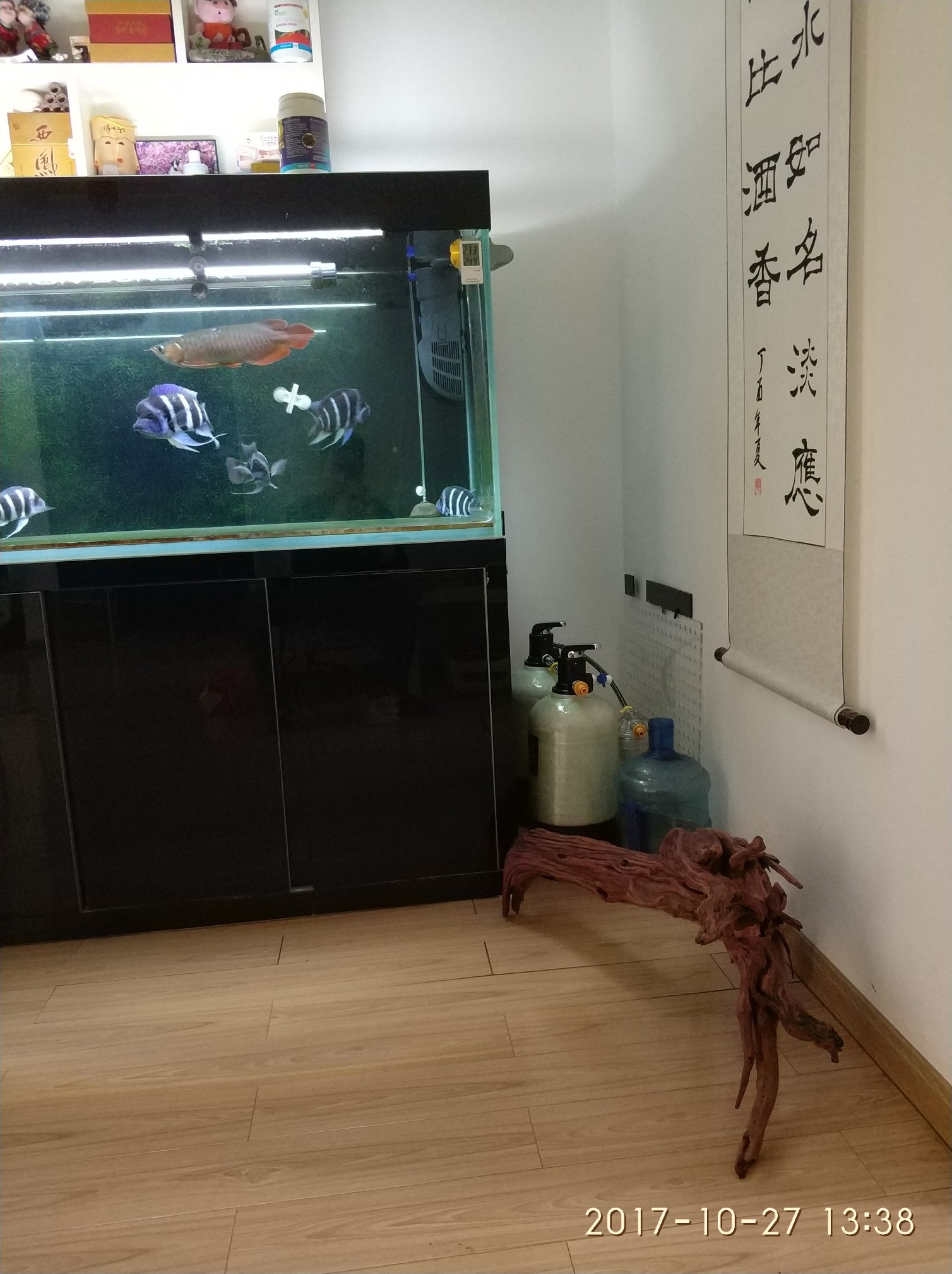 晒晒我的鱼们 西安观赏鱼信息 西安博特第6张