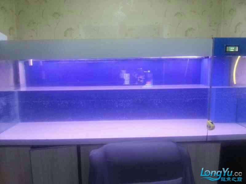24米×08米×08米DIY鱼缸完成今天试水希望成功西安飞凤鱼 西安观赏鱼信息 西安博特第1张