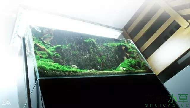 【西安虎鱼】西安白子关刀鱼哪个店的最好柳落云烟:抽象+创新= ? 西安观赏鱼信息 西安博特第5张
