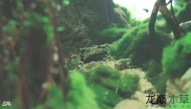 【西安虎鱼】西安白子关刀鱼哪个店的最好柳落云烟:抽象+创新= ? 西安观赏鱼信息 西安博特第8张