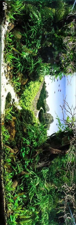 【西安虎鱼】西安白子关刀鱼哪个店的最好柳落云烟:抽象+创新= ? 西安观赏鱼信息 西安博特第13张