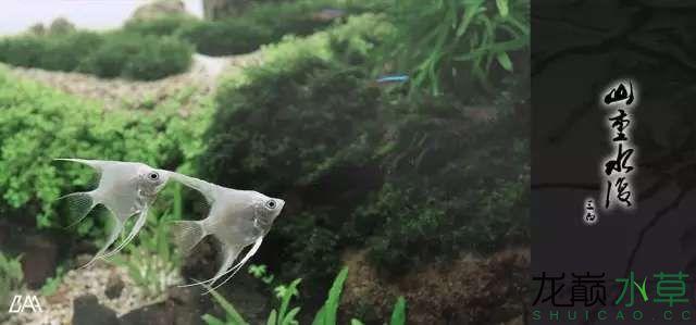 【西安虎鱼】西安白子关刀鱼哪个店的最好柳落云烟:抽象+创新= ? 西安观赏鱼信息 西安博特第19张